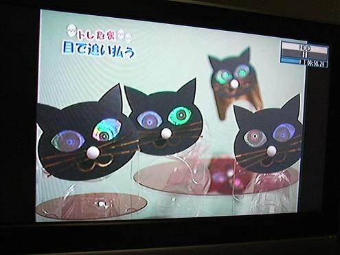 黒猫スキャット.jpg