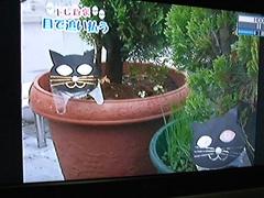 黒猫スキャット2.jpg