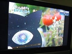 黒猫スキャット3.jpg