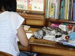 さっきまで勉強のじゃましてたリオン.JPG